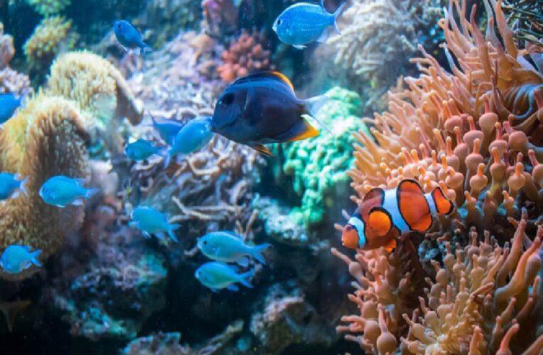 Naciones Unidas lanzan el proyecto proyecto GloLitter para acabar con la basura marina y limpiar los océanos